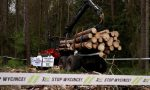 EU court orders Poland to stop logging in Białowieża forest