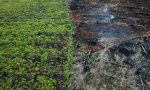 UK defies EU over Indonesian palm oil trade, leaked papers show