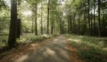 Warm weather increases the risk of forest fires in Brussels