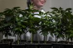Under pressure to legalise medical cannabis, Maggie De Block defends her position