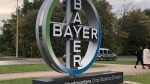 "According to the representative of Bayer, in the next 5 years there is no ""magic"" alternative to glyphosate"