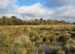 Belgium's most biodiverse nature reserve under threat